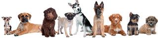 IV esposizione nazionale canina al Sant'Artemio