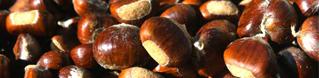 Arriva l'autunno: Treviso festeggia con le castagne